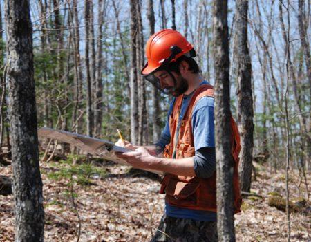 Services d'accompagnement et de planification de l'aménagement de votre boisé